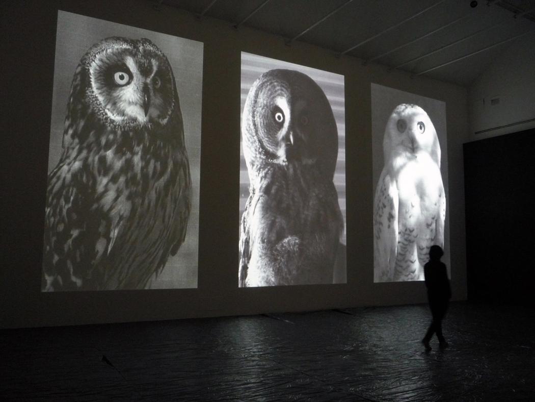 Alberto Tadiello, Sciolto lo sguardo nel rarefarsi di uno spazio eccedente, Proiezione digitale, Dimensioni ambientali, 2015